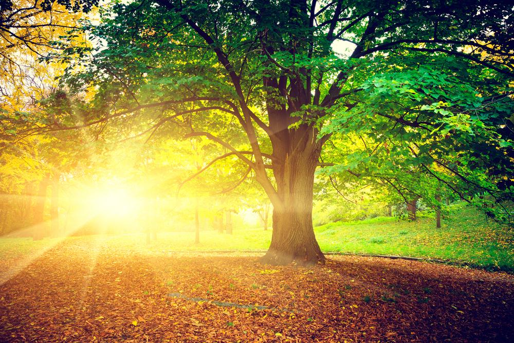 Drzewo Zmiennicy